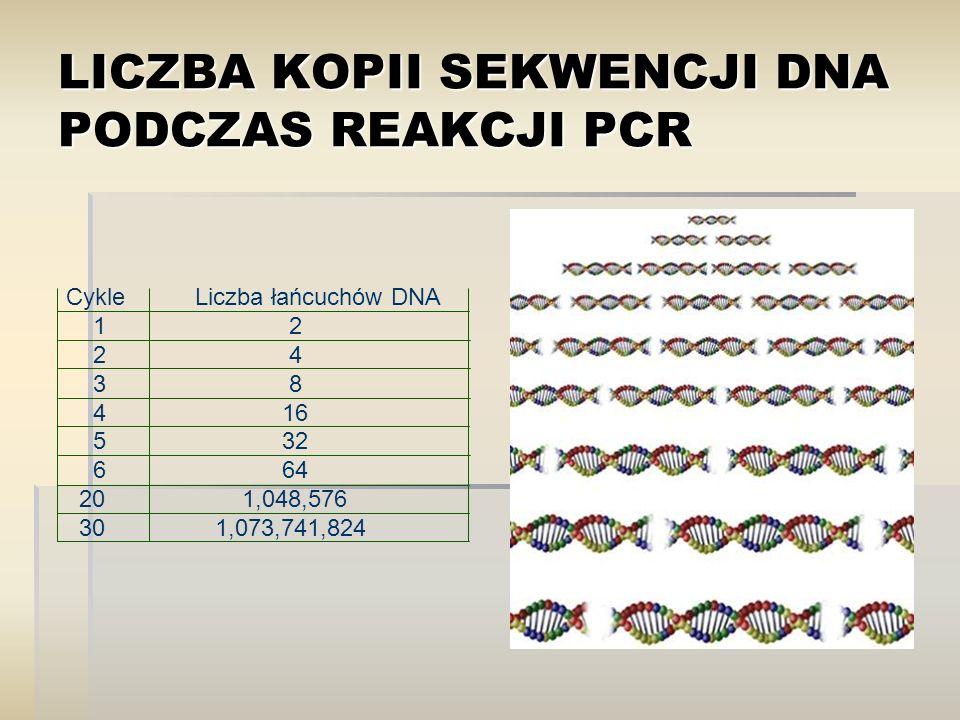 LICZBA KOPII SEKWENCJI DNA PODCZAS REAKCJI PCR Cykle Liczba łańcuchów DNA 1 2 2 4 3 8 4 16 5 32 6 64 20 1,048,576 30 1,073,741,824