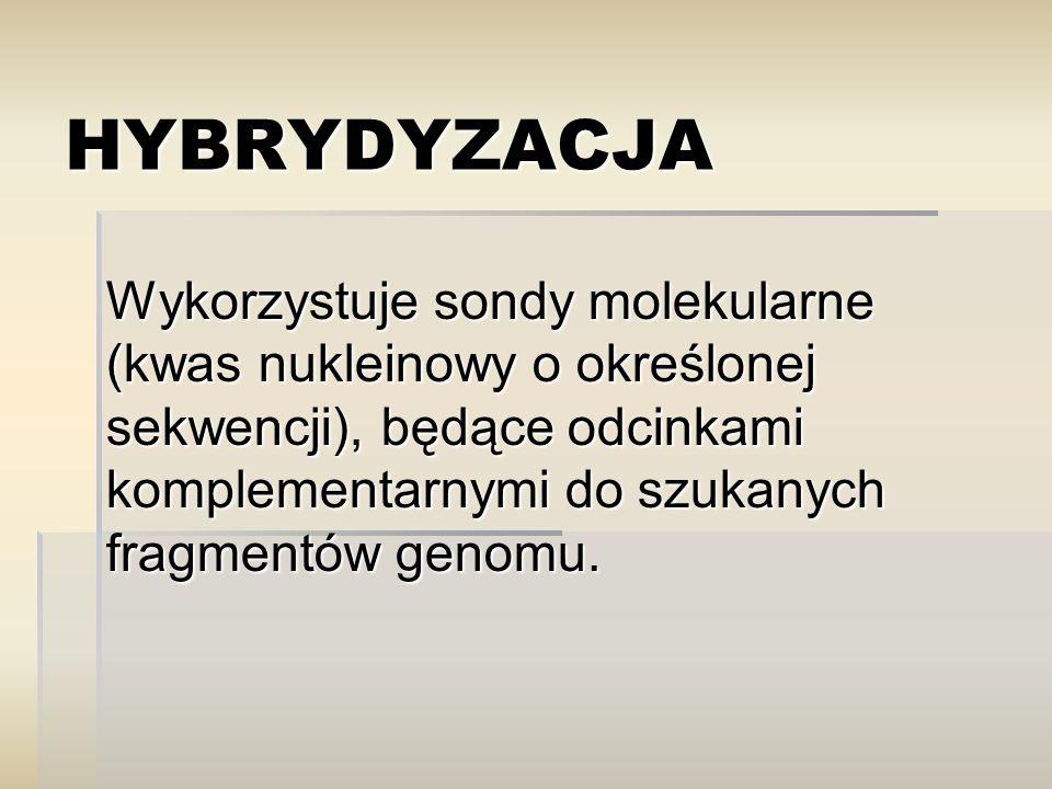HYBRYDYZACJA Wykorzystuje sondy molekularne (kwas nukleinowy o określonej sekwencji), będące odcinkami komplementarnymi do szukanych fragmentów genomu.