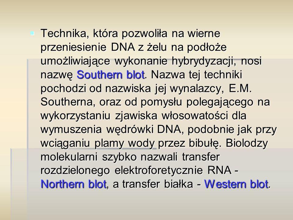  Technika, która pozwoliła na wierne przeniesienie DNA z żelu na podłoże umożliwiające wykonanie hybrydyzacji, nosi nazwę Southern blot.