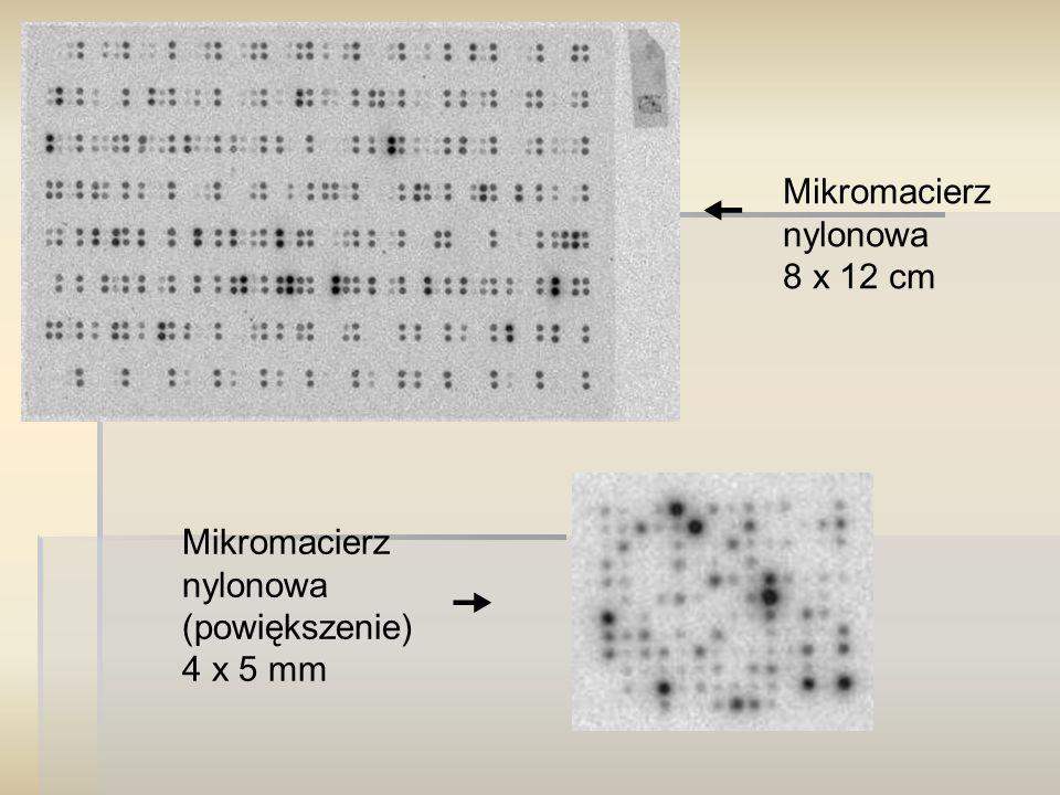Mikromacierz nylonowa 8 x 12 cm Mikromacierz nylonowa (powiększenie) 4 x 5 mm  