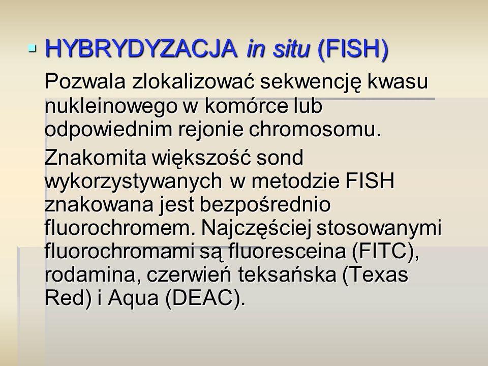  HYBRYDYZACJA in situ (FISH) Pozwala zlokalizować sekwencję kwasu nukleinowego w komórce lub odpowiednim rejonie chromosomu. Znakomita większość sond