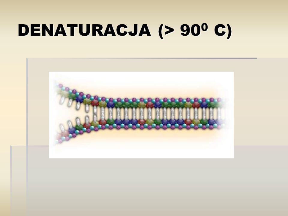  RT-PCR Umożliwia przeprowadzenie PCR-u na RNA: 1 etap to odwrotna transkrypcja (przepisanie informacji z RNA na DNA, dzięki enzymowi: odwrotna transkryptaza) 2 etap to standardowy PCR