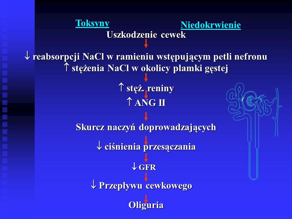 Toksyny Niedokrwienie Uszkodzenie cewek  reabsorpcji NaCl w ramieniu wstępującym petli nefronu  stężenia NaCl w okolicy plamki gęstej  stęż.