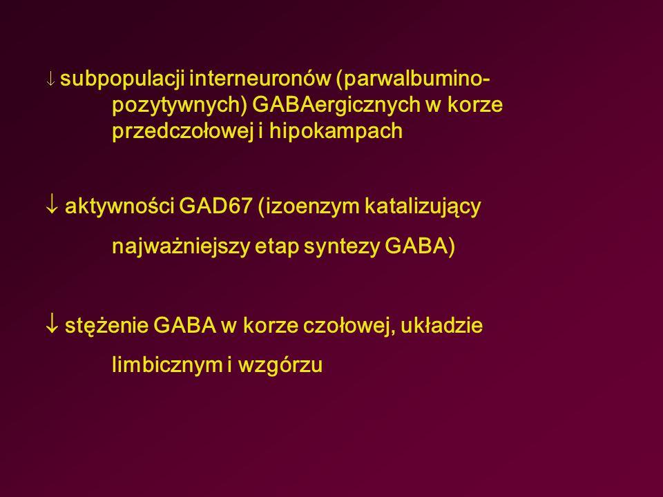  subpopulacji interneuronów (parwalbumino- pozytywnych) GABAergicznych w korze przedczołowej i hipokampach  aktywności GAD67 (izoenzym katalizujący najważniejszy etap syntezy GABA)  stężenie GABA w korze czołowej, układzie limbicznym i wzgórzu