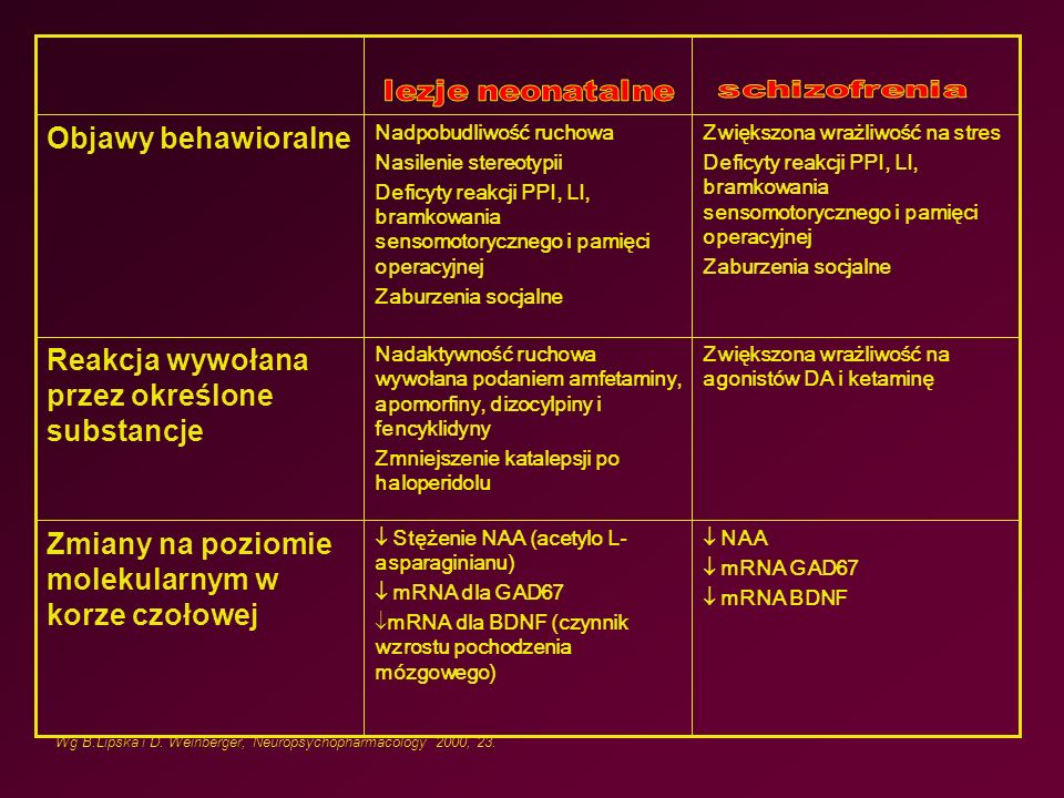 NAA  mRNA GAD67  mRNA BDNF  Stężenie NAA (acetylo L- asparaginianu)  mRNA dla GAD67  mRNA dla BDNF (czynnik wzrostu pochodzenia mózgowego) Zmiany na poziomie molekularnym w korze czołowej Zwiększona wrażliwość na agonistów DA i ketaminę Nadaktywność ruchowa wywołana podaniem amfetaminy, apomorfiny, dizocylpiny i fencyklidyny Zmniejszenie katalepsji po haloperidolu Reakcja wywołana przez określone substancje Zwiększona wrażliwość na stres Deficyty reakcji PPI, LI, bramkowania sensomotorycznego i pamięci operacyjnej Zaburzenia socjalne Nadpobudliwość ruchowa Nasilenie stereotypii Deficyty reakcji PPI, LI, bramkowania sensomotorycznego i pamięci operacyjnej Zaburzenia socjalne Objawy behawioralne Wg B.Lipska i D.
