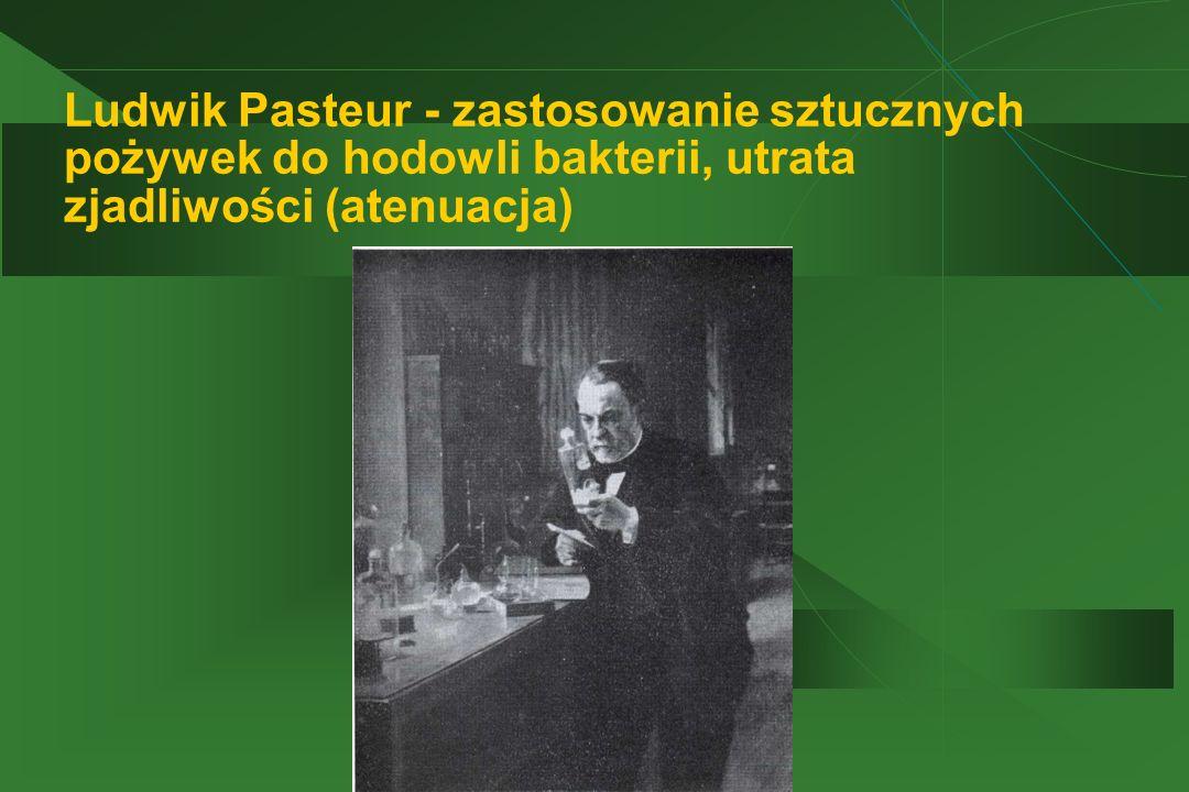 Ludwik Pasteur - zastosowanie sztucznych pożywek do hodowli bakterii, utrata zjadliwości (atenuacja)