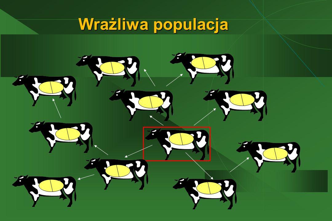 Wrażliwa populacja