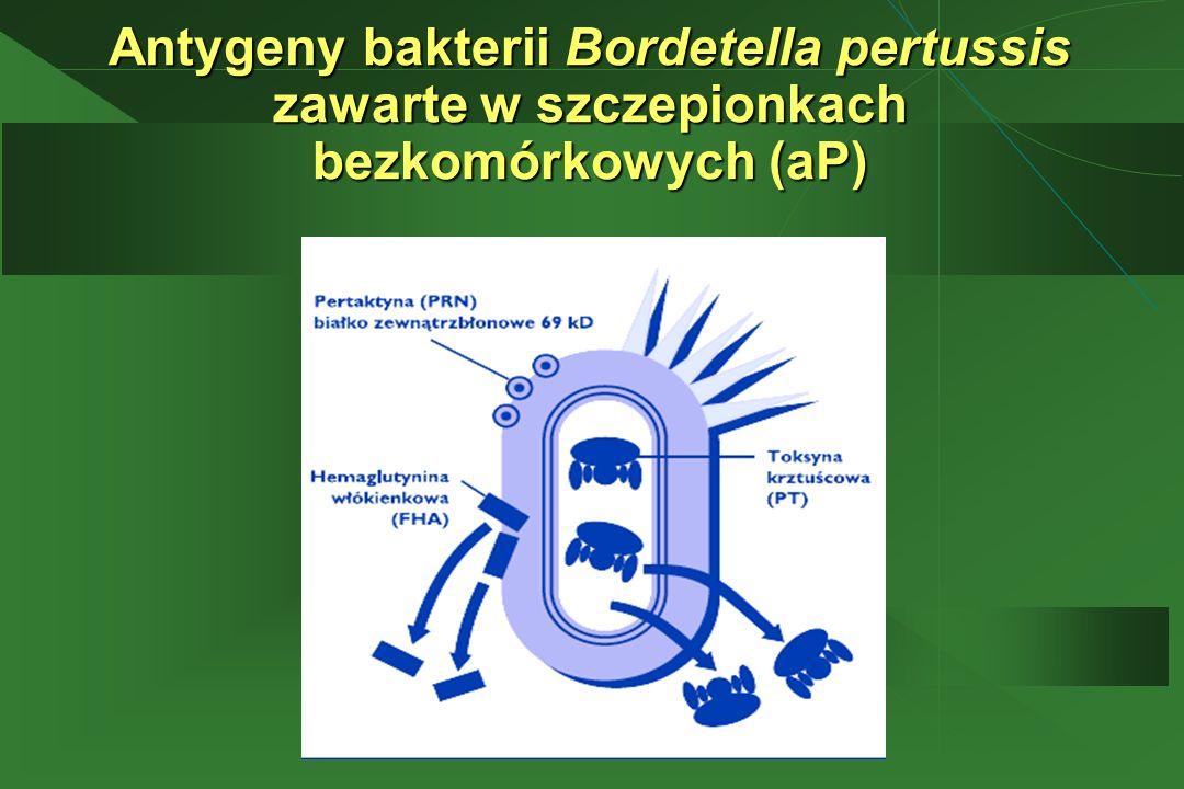 Antygeny bakterii Bordetella pertussis zawarte w szczepionkach bezkomórkowych (aP)
