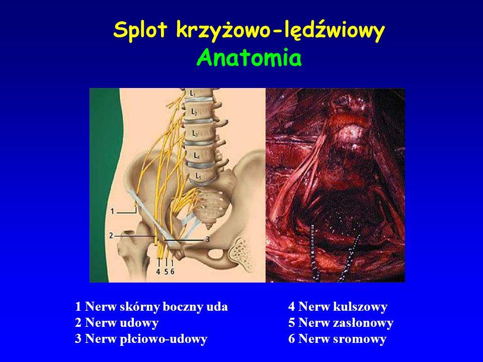 Splot krzyżowo-lędźwiowy Anatomia 1 Nerw skórny boczny uda 2 Nerw udowy 3 Nerw płciowo-udowy 4 Nerw kulszowy 5 Nerw zasłonowy 6 Nerw sromowy
