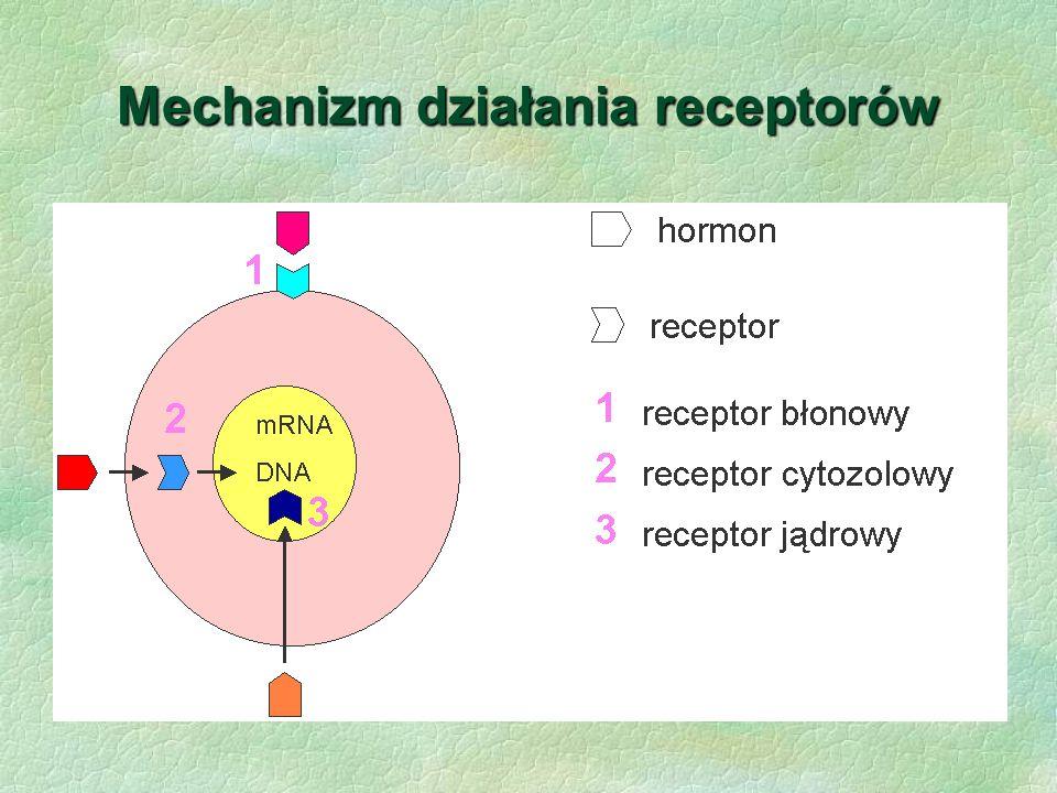 Mechanizm działania receptorów