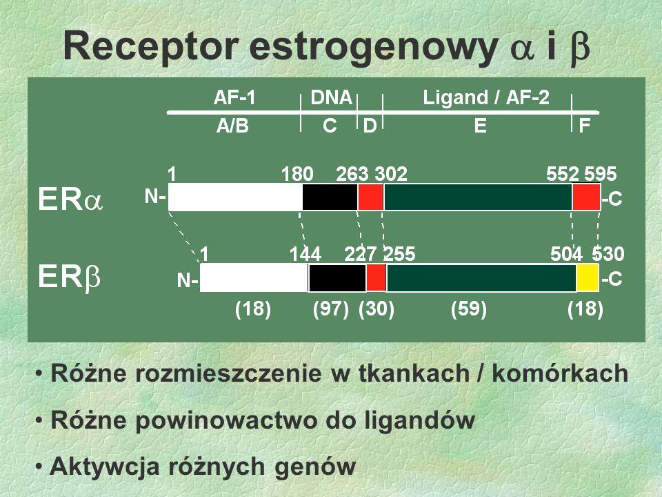 Receptor estrogenowy  i  Różne rozmieszczenie w tkankach / komórkach Różne powinowactwo do ligandów Aktywcja różnych genów