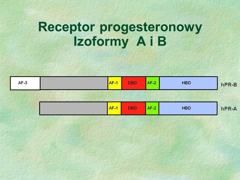Receptor progesteronowy Izoformy A i B hPR-B hPR-A