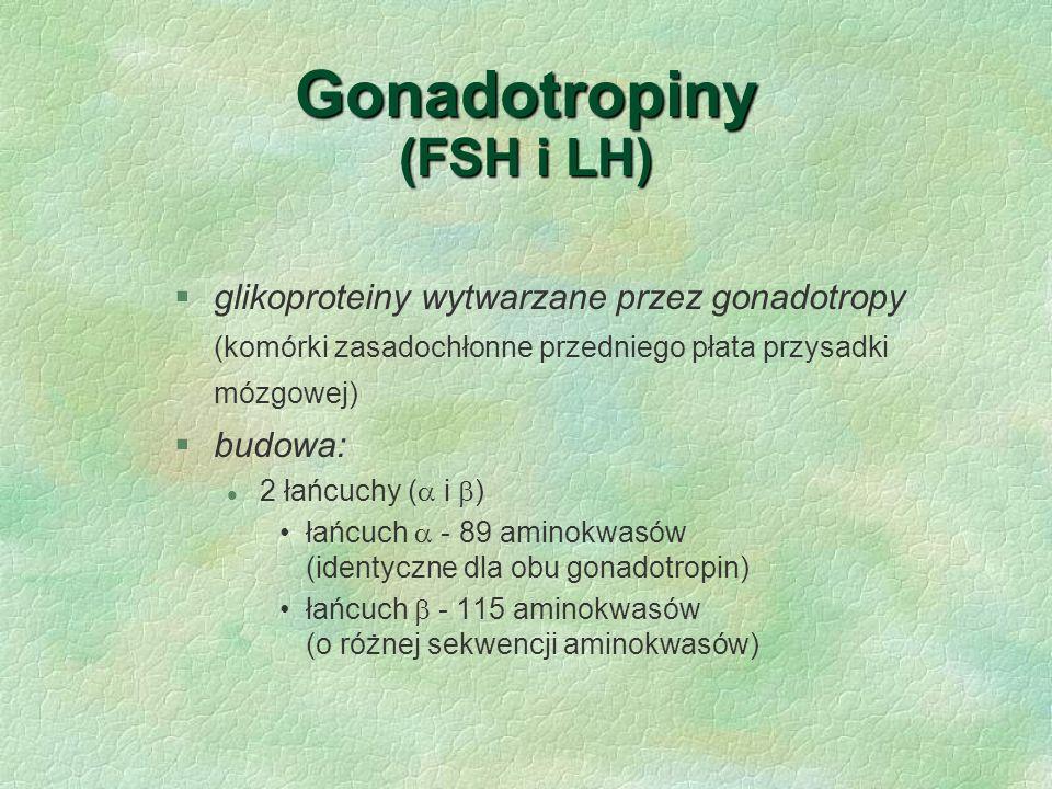 Gonadotropiny (FSH i LH) §glikoproteiny wytwarzane przez gonadotropy (komórki zasadochłonne przedniego płata przysadki mózgowej) §budowa: l 2 łańcuchy