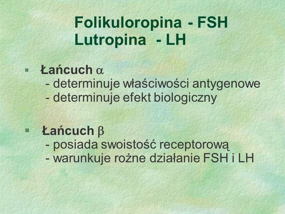 Folikuloropina - FSH Lutropina - LH  Łańcuch  - determinuje właściwości antygenowe - determinuje efekt biologiczny § Łańcuch  - posiada swoistość r