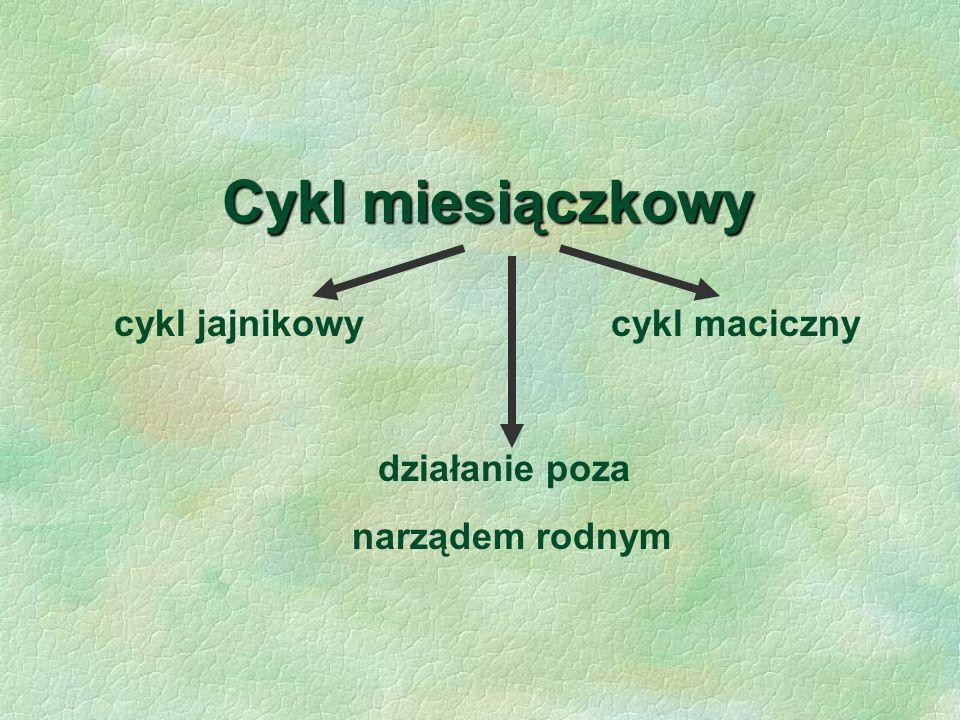 Cykl miesiączkowy cykl jajnikowy cykl maciczny działanie poza narządem rodnym