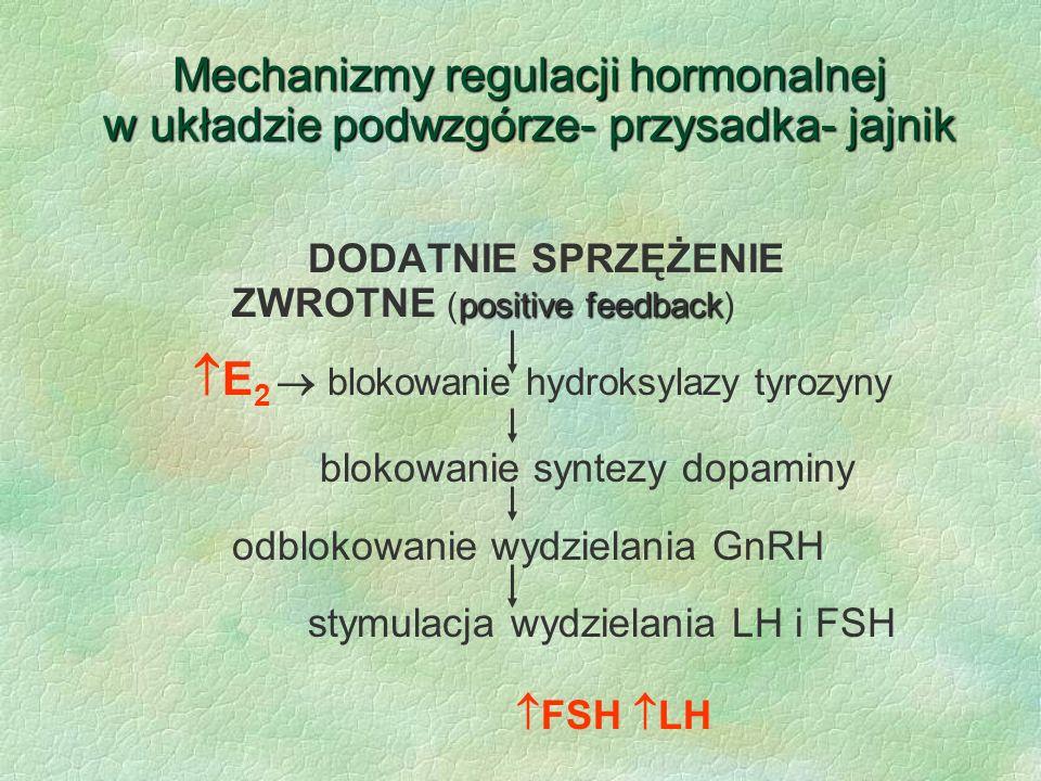 Mechanizmy regulacji hormonalnej w układzie podwzgórze- przysadka- jajnik positive feedback DODATNIE SPRZĘŻENIE ZWROTNE (positive feedback)  E 2  bl