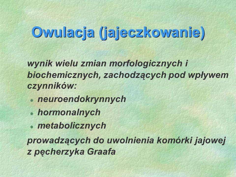 Owulacja (jajeczkowanie) wynik wielu zmian morfologicznych i biochemicznych, zachodzących pod wpływem czynników: l neuroendokrynnych l hormonalnych l