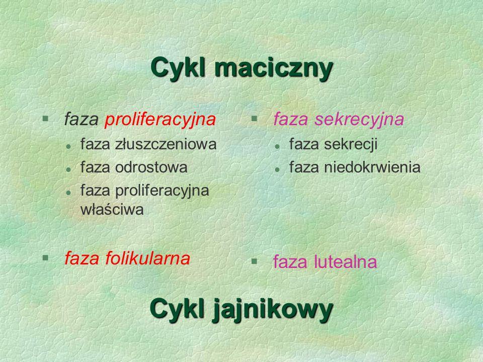 Cykl maciczny  faza proliferacyjna l faza złuszczeniowa l faza odrostowa l faza proliferacyjna właściwa § faza folikularna § faza sekrecyjna l faza s