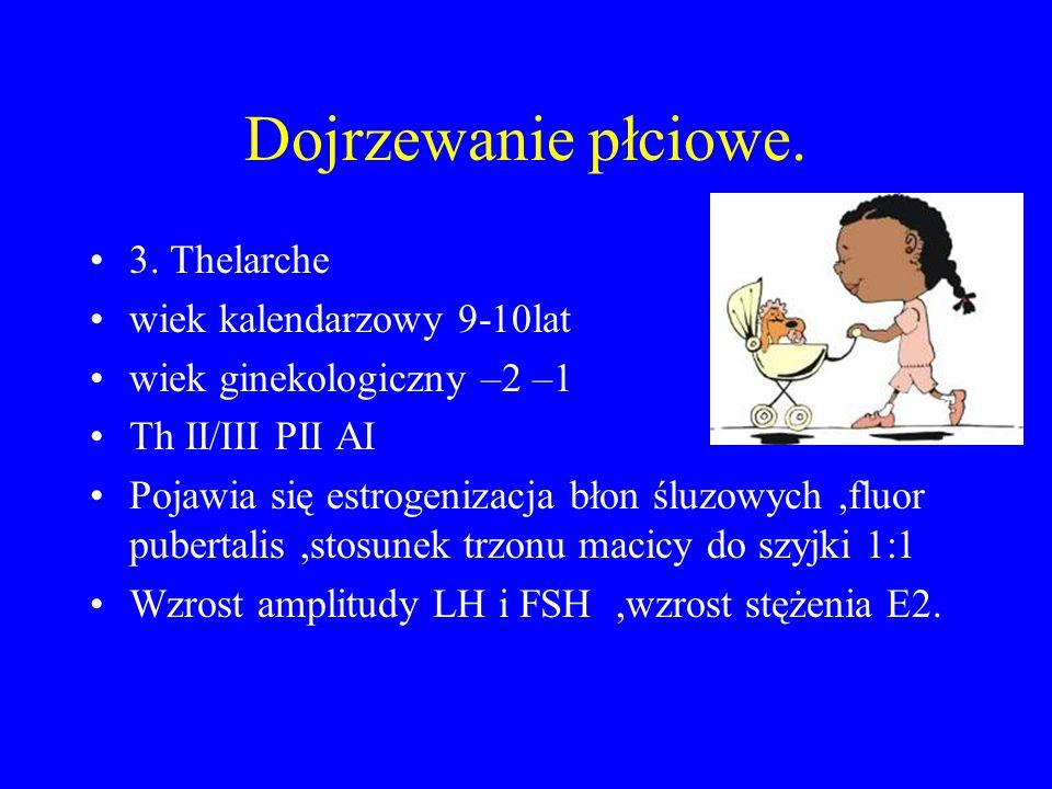 Dojrzewanie płciowe. 3. Thelarche wiek kalendarzowy 9-10lat wiek ginekologiczny –2 –1 Th II/III PII AI Pojawia się estrogenizacja błon śluzowych,fluor