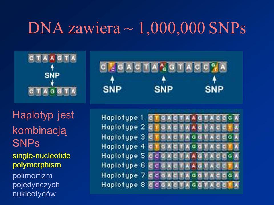DNA zawiera ~ 1,000,000 SNPs Haplotyp jest kombinacją SNPs single-nucleotide polymorphism polimorfizm pojedynczych nukleotydów