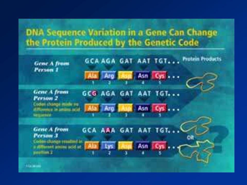 Pierwsze poznane zależności pomiędzy genetycznie uwarunkowanymi różnicami w aktywności enzymów a objawami niepożądanymi stosowanych leków Wrodzony deficyt osoczowej cholinesterazy – wydłużone zwiotczenie mięśni po suksametonium Dziedziczne warianty dehydrogenazy glukozo-6- fosforanów (G6PD) – hemoliza po lekach p-malarycznych Wrodzony deficyt dehydrogenazy aldehydowej (ALDH) związanej z metabolizmem etanolu – wrażliwość na działanie alkoholu