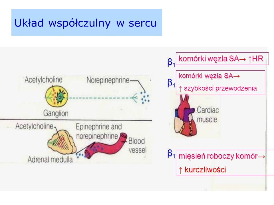 Układ współczulny w sercu β1β1β1β1 komórki węzła SA → ↑HR β1β1β1β1 komórki węzła SA→ ↑ ↑ szybkości przewodzenia β1β1β1β1 mięsień roboczy komór→ ↑ kurczliwości