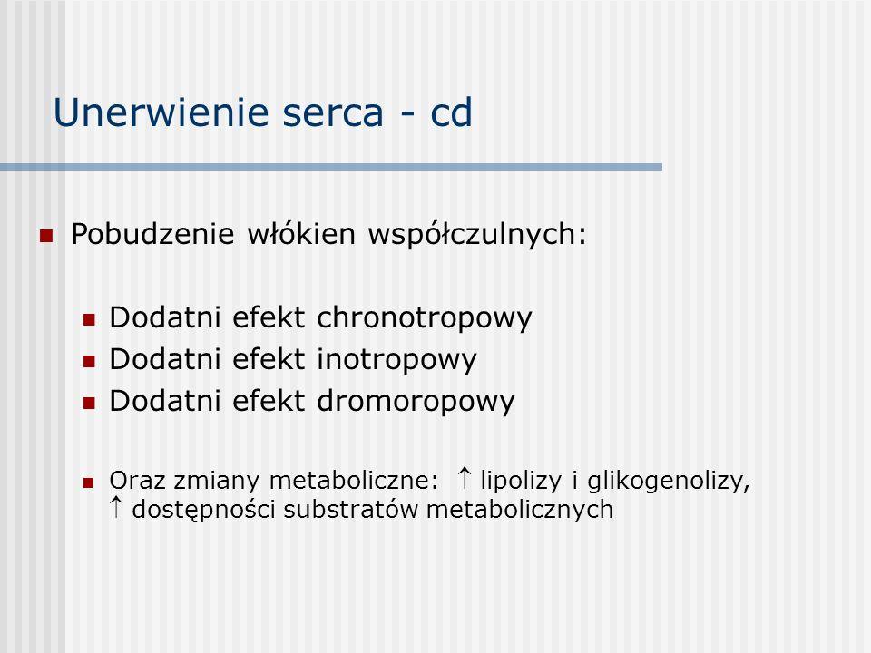Unerwienie serca - cd Pobudzenie włókien współczulnych: Dodatni efekt chronotropowy Dodatni efekt inotropowy Dodatni efekt dromoropowy Oraz zmiany metaboliczne:  lipolizy i glikogenolizy,  dostępności substratów metabolicznych