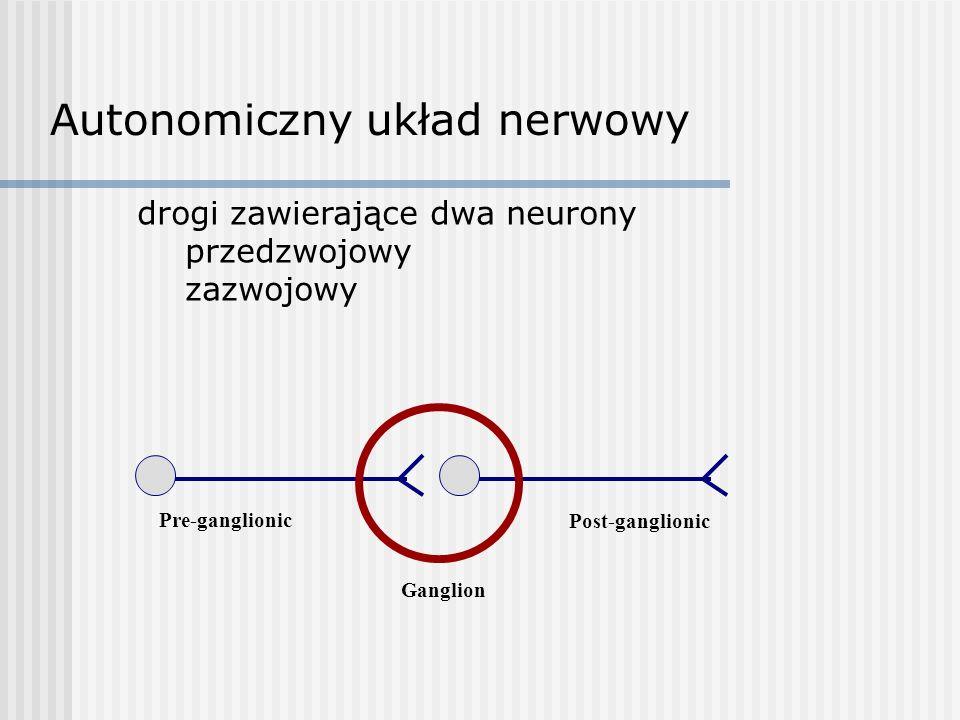 drogi zawierające dwa neurony przedzwojowy zazwojowy Pre-ganglionic Ganglion Post-ganglionic Autonomiczny układ nerwowy
