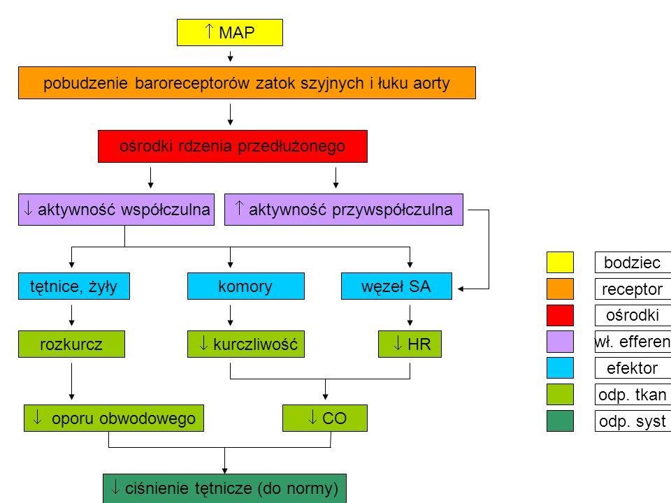  MAP ośrodki rdzenia przedłużonego pobudzenie baroreceptorów zatok szyjnych i łuku aorty  kurczliwość rozkurcz tętnice, żyły  aktywność współczulna  aktywność przywspółczulna węzeł SAkomory  HR  oporu obwodowego  CO  ciśnienie tętnicze (do normy) bodziec ośrodki odp.