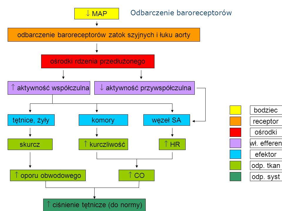  MAP ośrodki rdzenia przedłużonego odbarczenie baroreceptorów zatok szyjnych i łuku aorty  kurczliwość skurcz tętnice, żyły  aktywność współczulna  aktywność przywspółczulna węzeł SAkomory  HR  oporu obwodowego  CO  ciśnienie tętnicze (do normy) bodziec ośrodki odp.