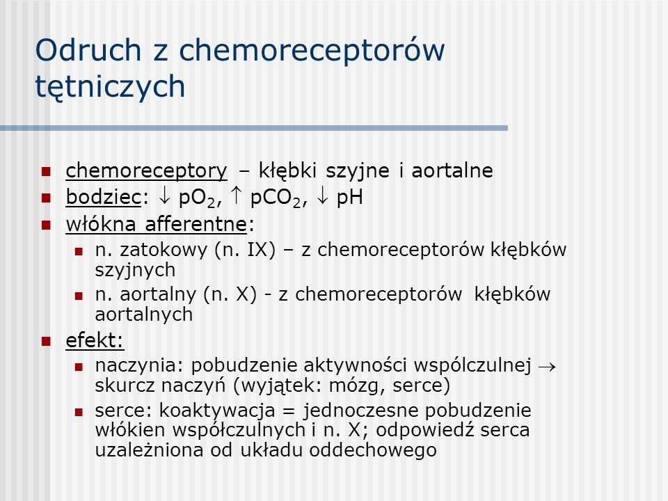 Odruch z chemoreceptorów tętniczych chemoreceptory – kłębki szyjne i aortalne bodziec:  pO 2,  pCO 2,  pH włókna afferentne: n.