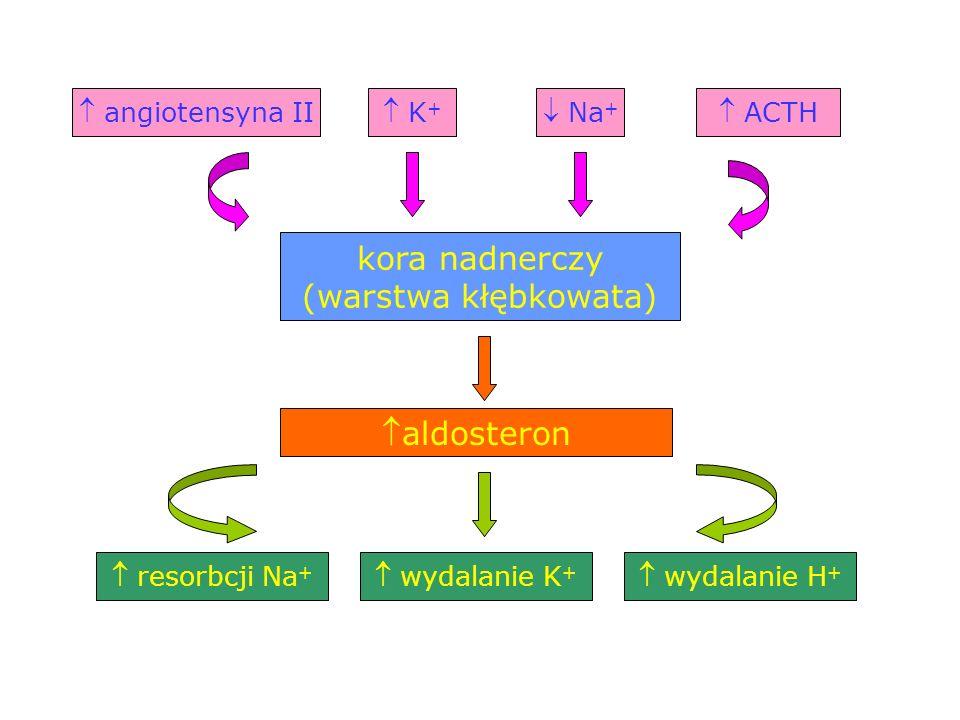  K + kora nadnerczy (warstwa kłębkowata)  angiotensyna II ACTH aldosteron  resorbcji Na +  Na +  wydalanie K +  wydalanie H +