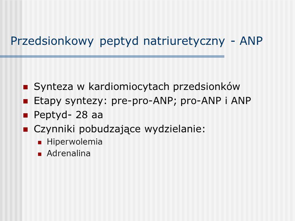 Przedsionkowy peptyd natriuretyczny - ANP Synteza w kardiomiocytach przedsionków Etapy syntezy: pre-pro-ANP; pro-ANP i ANP Peptyd- 28 aa Czynniki pobudzające wydzielanie: Hiperwolemia Adrenalina