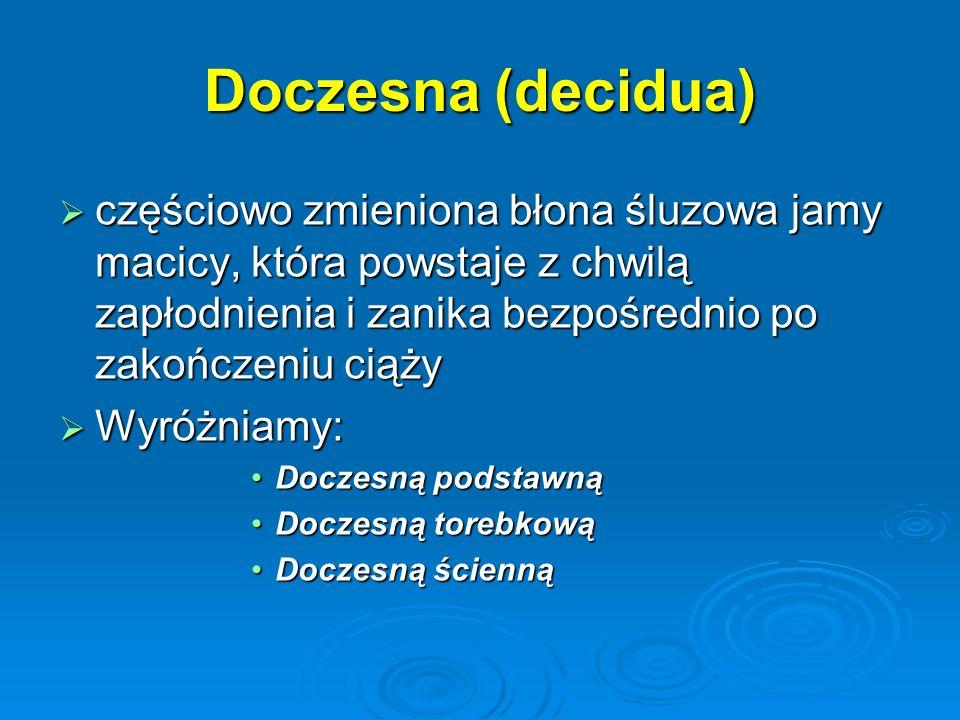Doczesna (decidua)  częściowo zmieniona błona śluzowa jamy macicy, która powstaje z chwilą zapłodnienia i zanika bezpośrednio po zakończeniu ciąży  Wyróżniamy: Doczesną podstawnąDoczesną podstawną Doczesną torebkowąDoczesną torebkową Doczesną ściennąDoczesną ścienną