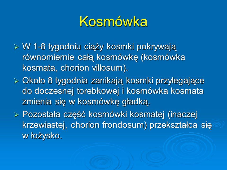 Kosmówka  W 1-8 tygodniu ciąży kosmki pokrywają równomiernie całą kosmówkę (kosmówka kosmata, chorion villosum).