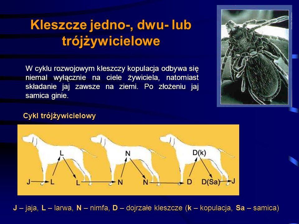 Kleszcze jedno-, dwu- lub trójżywicielowe W cyklu rozwojowym kleszczy kopulacja odbywa się niemal wyłącznie na ciele żywiciela, natomiast składanie ja