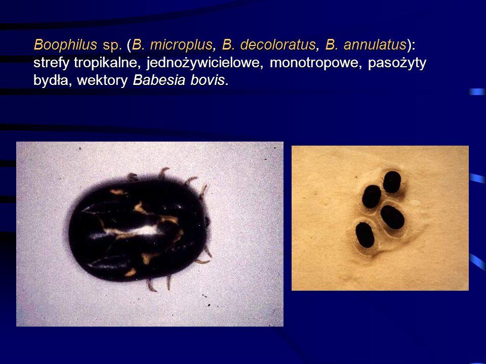 Boophilus sp. (B. microplus, B. decoloratus, B. annulatus): strefy tropikalne, jednożywicielowe, monotropowe, pasożyty bydła, wektory Babesia bovis.
