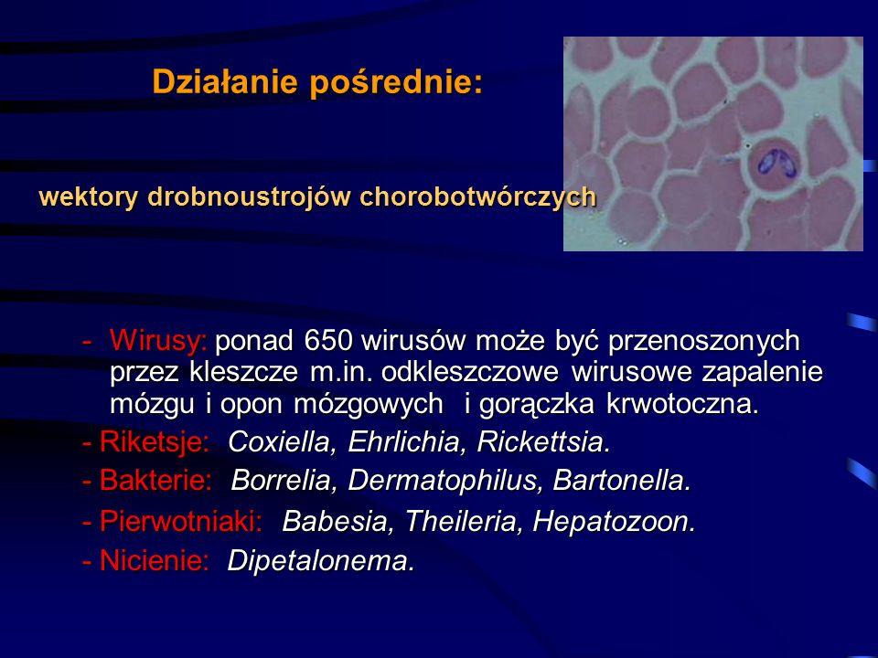 Działanie pośrednie: wektory drobnoustrojów chorobotwórczych -Wirusy:ponad 650 wirusów może być przenoszonych przez kleszcze m.in. odkleszczowe wiruso