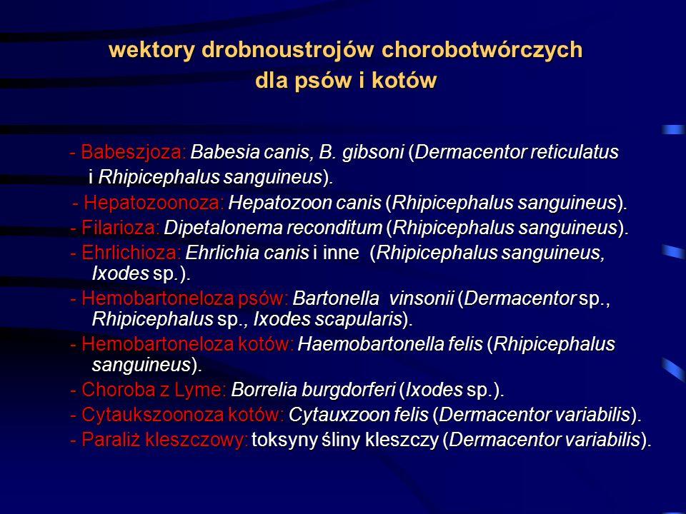 wektory drobnoustrojów chorobotwórczych dla psów i kotów - Babeszjoza: Babesia canis, B. gibsoni (Dermacentor reticulatus - Babeszjoza: Babesia canis,