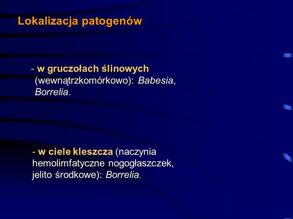 Lokalizacja patogenów - w gruczołach ślinowych (wewnątrzkomórkowo): Babesia, Borrelia. - w gruczołach ślinowych (wewnątrzkomórkowo): Babesia, Borrelia