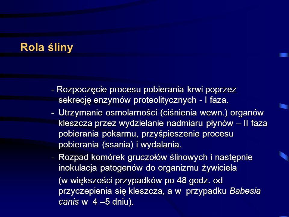 Rola śliny Rola śliny - Rozpoczęcie procesu pobierania krwi poprzez sekrecję enzymów proteolitycznych - I faza. -Utrzymanie osmolarności (ciśnienia we