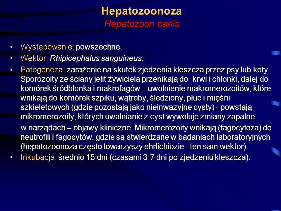 Hepatozoonoza Hepatozoon canis Występowanie:powszechne.Występowanie: powszechne. Wektor: Rhipicephalus sanguineus.Wektor: Rhipicephalus sanguineus. Pa