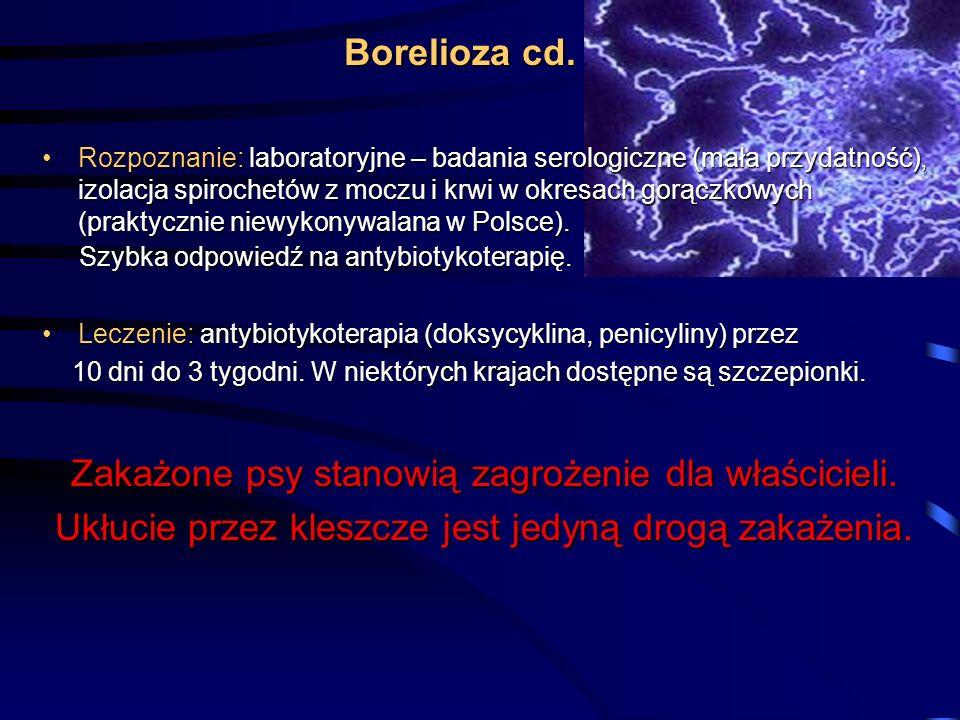 Rozpoznanie: laboratoryjne – badania serologiczne (mała przydatność), izolacja spirochetów z moczu i krwi w okresach gorączkowych (praktycznie niewyko