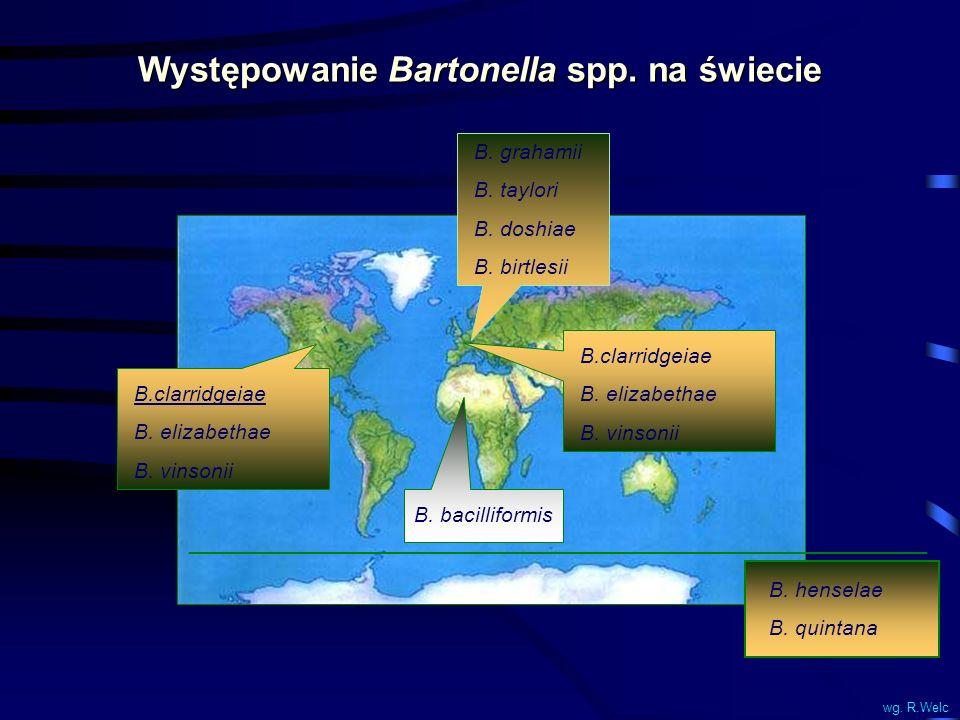 Występowanie Bartonella spp. na świecie B. grahamii B. taylori B. doshiae B. birtlesii B.clarridgeiae B. elizabethae B. vinsonii B.clarridgeiae B. eli