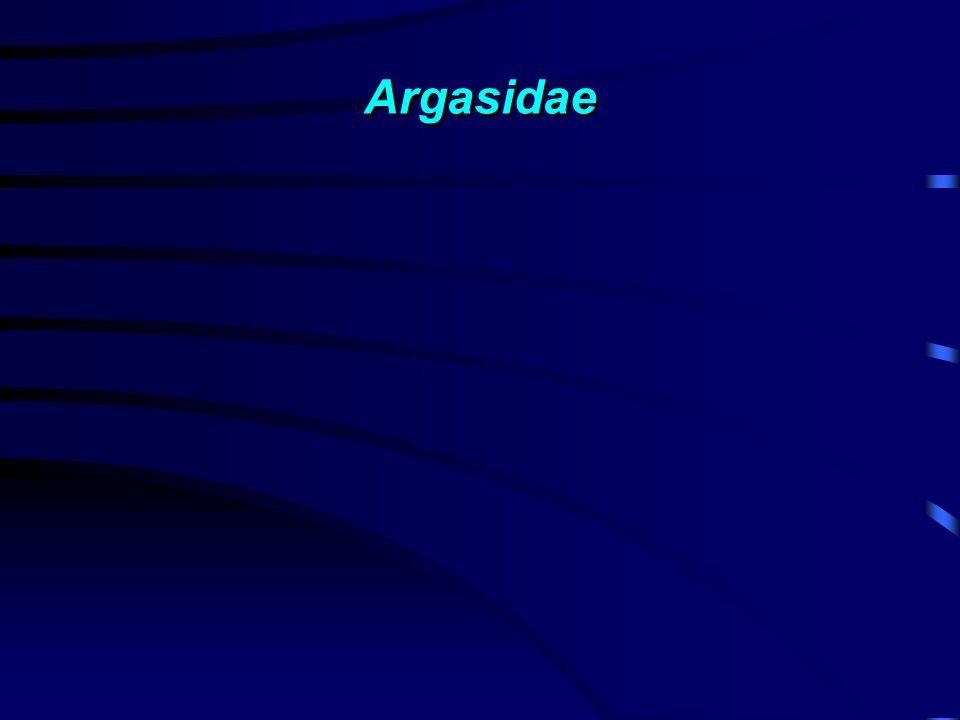 Argasidae