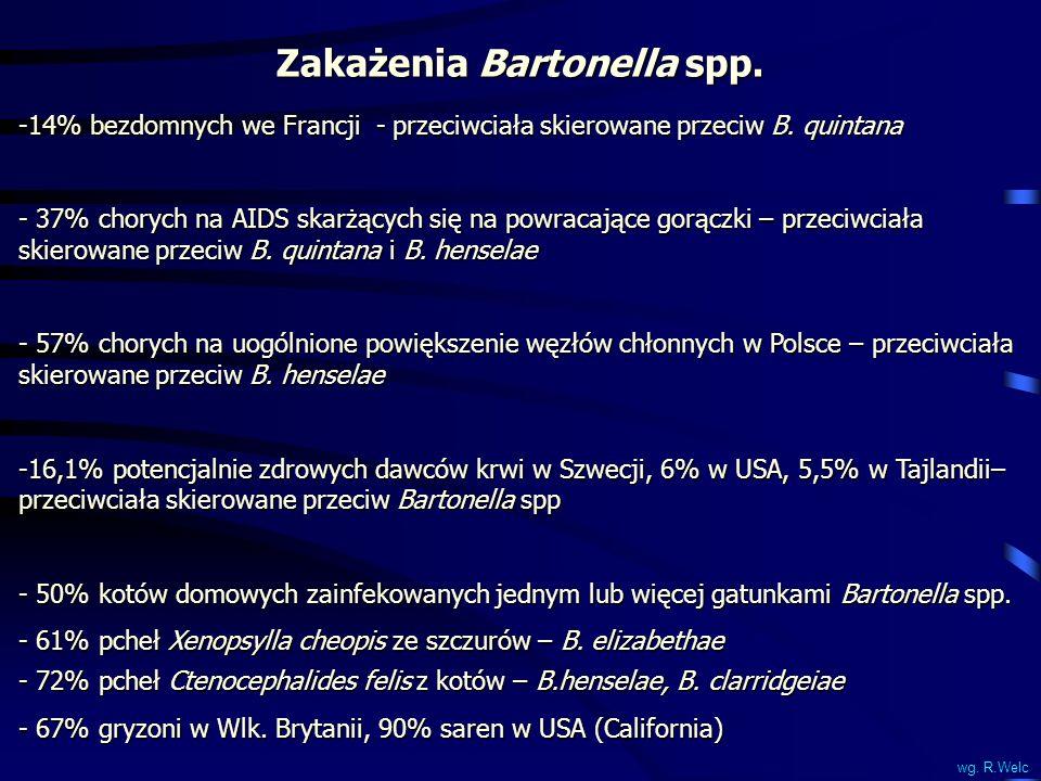 Zakażenia Bartonella spp. -14% bezdomnych we Francji - przeciwciała skierowane przeciw B. quintana - 37% chorych na AIDS skarżących się na powracające
