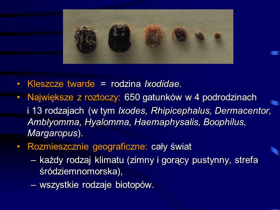 Kleszcze twarde = rodzina Ixodidae.Kleszcze twarde = rodzina Ixodidae. Największe z roztoczy: 650 gatunków w 4 podrodzinachNajwiększe z roztoczy: 650