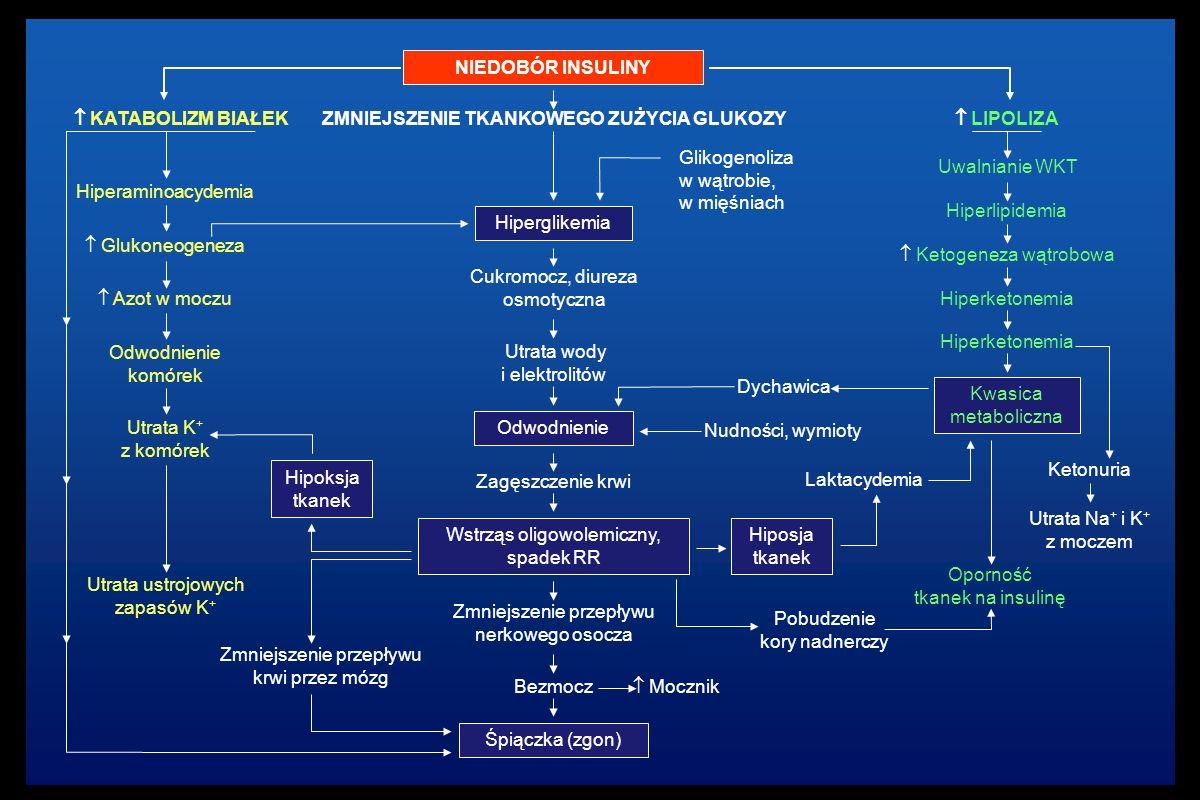 NIEDOBÓR INSULINY ZMNIEJSZENIE TKANKOWEGO ZUŻYCIA GLUKOZY Hiperglikemia Glikogenoliza w wątrobie, w mięśniach Cukromocz, diureza osmotyczna Utrata wody i elektrolitów Odwodnienie Zagęszczenie krwi Wstrząs oligowolemiczny, spadek RR Zmniejszenie przepływu nerkowego osocza Bezmocz Śpiączka (zgon) Dychawica Nudności, wymioty  Mocznik Hipoksja tkanek Zmniejszenie przepływu krwi przez mózg Hiposja tkanek Pobudzenie kory nadnerczy  LIPOLIZA Uwalnianie WKT Hiperketonemia  Ketogeneza wątrobowa Hiperketonemia Kwasica metaboliczna Laktacydemia Ketonuria Utrata Na + i K + z moczem Oporność tkanek na insulinę  KATABOLIZM BIAŁEK Hiperaminoacydemia  Glukoneogeneza  Azot w moczu Odwodnienie komórek Utrata K + z komórek Utrata ustrojowych zapasów K + Hiperlipidemia