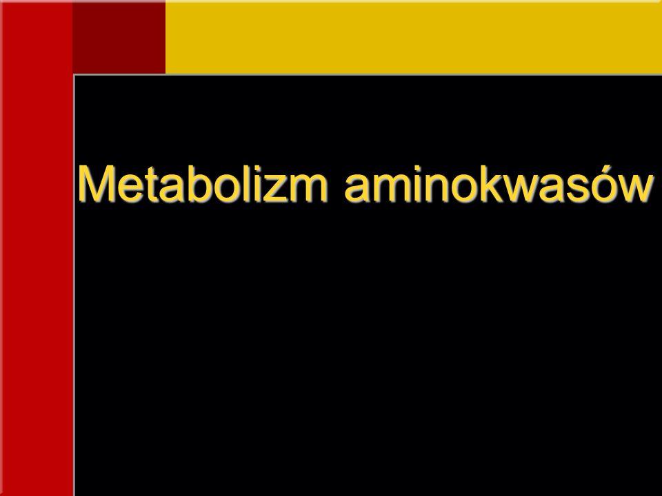 Metabolizm aminokwasów