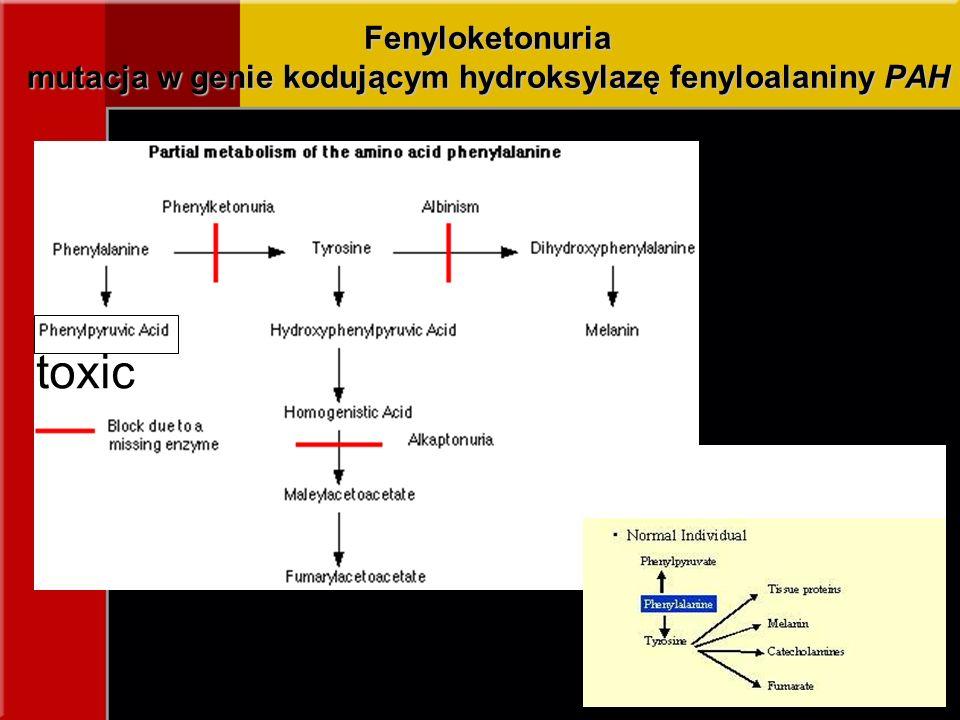 Fenyloketonuria mutacja w genie kodującym hydroksylazę fenyloalaniny PAH toxic